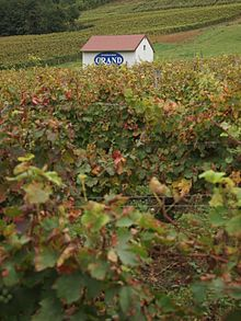 Bodegas Grand vineyard in Passenans, Jura, France.jpg