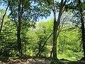 Bois, route de l'Aérodrome, Port-Sainte-Foy-et-Ponchapt, Fougueyrolles 5.jpg