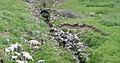 Bondens steinbro, med miljø.jpg