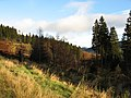 Boreland Forest - geograph.org.uk - 281290.jpg