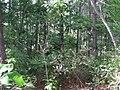 Bosque mixto del cerro.JPG