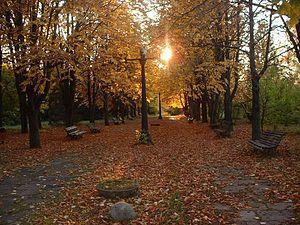 Iași Botanical Garden - An alley near the entrance to the garden's grounds