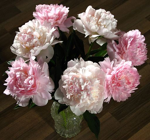 Bouquet of peonies 03