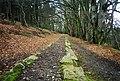Bovey Tracey, Haytor Tramway in Yarner Woods - geograph.org.uk - 42156.jpg