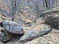 Boynton Canyon Trail, Sedona, Arizona - panoramio (57).jpg