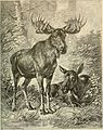 Brehm's Life of animals - a complete natural history for popular home instruction and for the use of schools (1895) (20404686902).jpg
