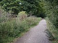 Bridleway into New Copse - geograph.org.uk - 593587.jpg