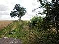 Bridleway to Tibthorpe Lodge - geograph.org.uk - 1430772.jpg