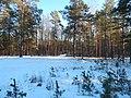 Bryansky District, Bryansk Oblast, Russia - panoramio (27).jpg