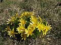 Brzke jaro - spidlaky - prirodni rezervace - 03.jpg