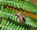 Bug July 2010-2.jpg