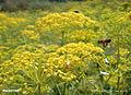 Burnatflowers8.jpg