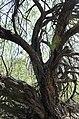 Butcher Jones Trail, Burro Cove and Beyond, Tonto National Park, Arizona - panoramio (41).jpg