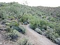 Butcher Jones Trail - Mt. Pinter Loop Trail, Saguaro Lake - panoramio (36).jpg