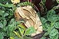 Butterfly Rainforest FMNH 21.jpg