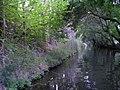 C'è anche il Viola - panoramio.jpg
