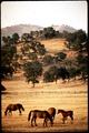 CALIFORNIA--SIERRA FOOTHILLS - NARA - 542622.tif