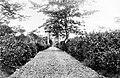 COLLECTIE TROPENMUSEUM 40-Jarige theetuin Pondok Gedeh-landen TMnr 10011896.jpg