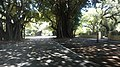CORAL GABLES SHADOW - panoramio.jpg