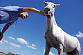 Caballo Horse CUACO II (2369132063).jpg