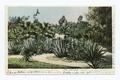 Cacti Garden, Westlake Park, Los Angeles, Calif (NYPL b12647398-67868).tiff