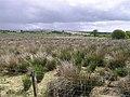 Caldanagh Townland - geograph.org.uk - 857839.jpg