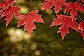 Canadian Symbol (2978524804).jpg