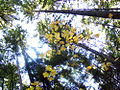 Canopy (4062847053).jpg