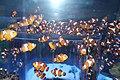 Capetown - Two Oceans Aquarium IMG 9441.JPG