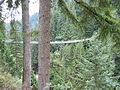 Capilano suspension bridge -f.jpg