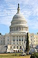 Capitol Christmas Tree 2013 (11052413316).jpg