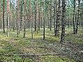 Carnikavas novads, LV-2163, Latvia - panoramio.jpg
