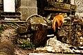 Cat - Père Lachaise Cemetery - 01.jpg