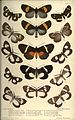Catalogue of eastern and Australian Lepidoptera Heterocera in the collection of the Oxford University Museum BHL23357620.jpg