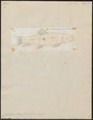 Catostomus teres - 1798-1876 - Print - Iconographia Zoologica - Special Collections University of Amsterdam - UBA01 IZ15000005.tif