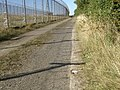 Cats eyes on the bridleway - geograph.org.uk - 1493080.jpg