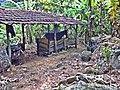 Cavalho - panoramio.jpg
