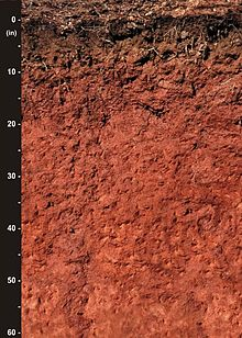 Cecil soil wikipedia for Soil yellow color