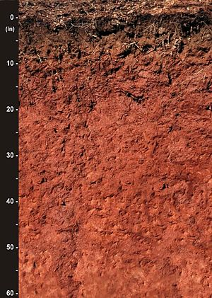 Cecil (soil) - Image: Cecil soil