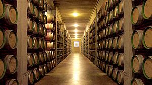 Cellar at Marques de Riscal winery in Elciego, Spain 2.jpg