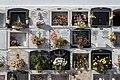 Cemetery, Candelaria, Tenerife, Spain 11.jpg