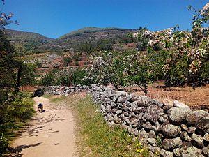 Cerezos tardíos a la altura de Cabezuela, Valle del Jerte.jpg