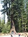 Chandelier Tree - Maximillian Dornseif.jpg