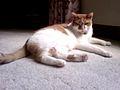 Charlie Cat.jpg