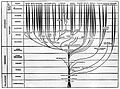 Charts; tree, plants and animal stem. Wellcome M0001300.jpg