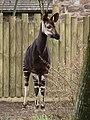 Chester Zoo (9487390082).jpg
