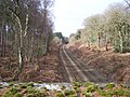 Chester to Manchester railway in Delamere Forest - geograph.org.uk - 1177075.jpg