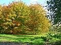 Chestnut windbreak - geograph.org.uk - 1023197.jpg