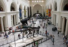 The main hall of the Field Museum of Natural History in 2007, with Sue the T. rex in the foreground