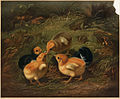Chickens (Boston Public Library).jpg